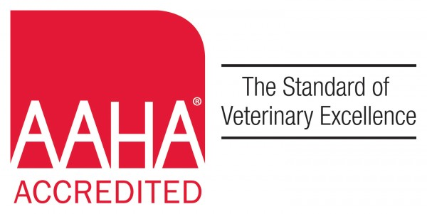 Just say yes to AAHA accreditation!