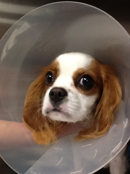 """Time for """"The Talk"""": Spaying and neutering your pet!"""