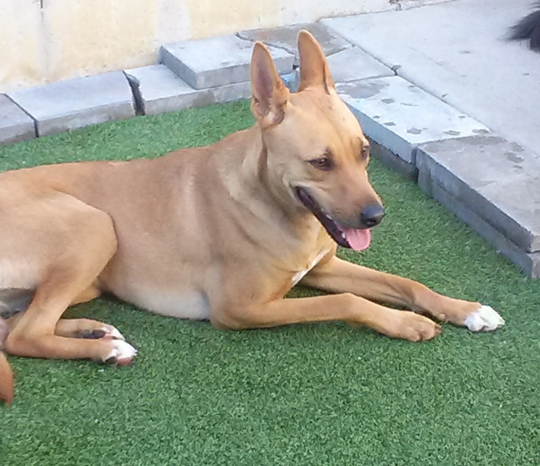 Dog Day Care Naples Fl